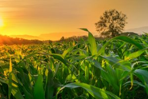 O Brasil é pioneiro na produção de biocombustíveis
